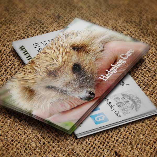 hedgehog care website business cards